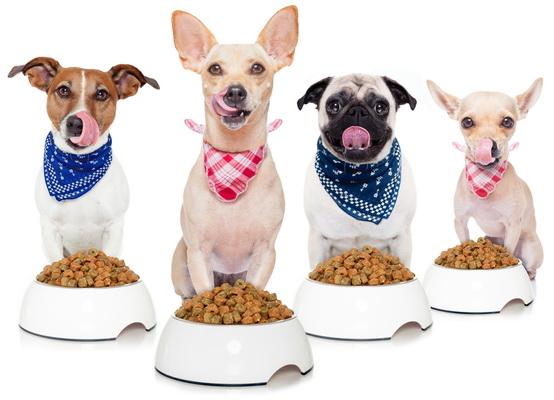 karmienie psa