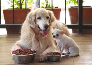 Karmienie małych i dużych psów
