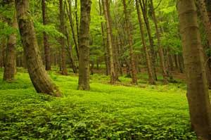 Dlaczego warto chronić przyrodę