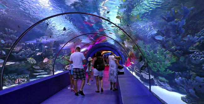 Największe oceanarium na świecie znajduje się w chińskim parku rozrywki