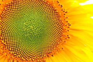 System bukmacherski Fibonacciego