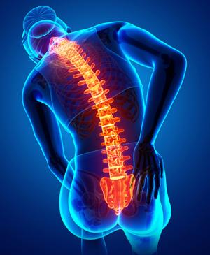 Funkcje rdzenia kręgowego