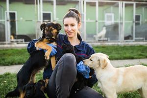 Jak zostać wolontariuszem w schronisku dla zwierząt