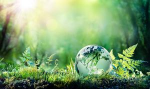 Powstawanie ekosystemów