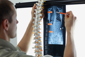 Struktura wewnętrzna rdzenia kręgowego