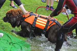 Służba nowofundlandów w ratownictwie wodnym