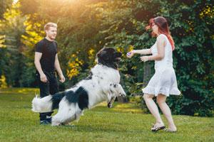 Nowofundland jest typem psa rodzinnego