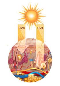 Promienie UVB i UVA