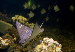 Największa wystawa ryb akwariowych w Polsce